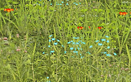 Dhm grass flowers 02